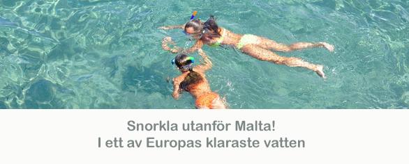 medelhavsmall_mellan_snorkla_malta